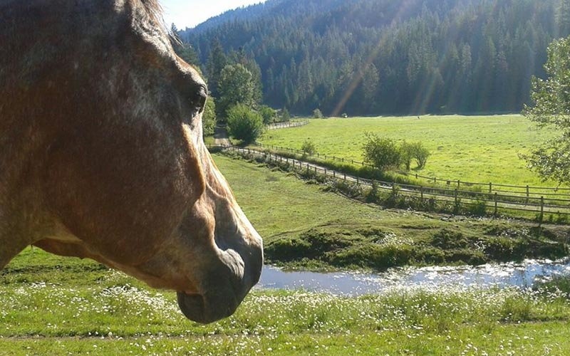 close up of horse overlooking stream and ranch field