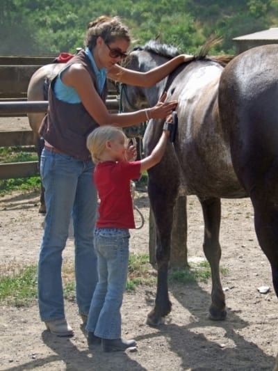 child meeting a horse