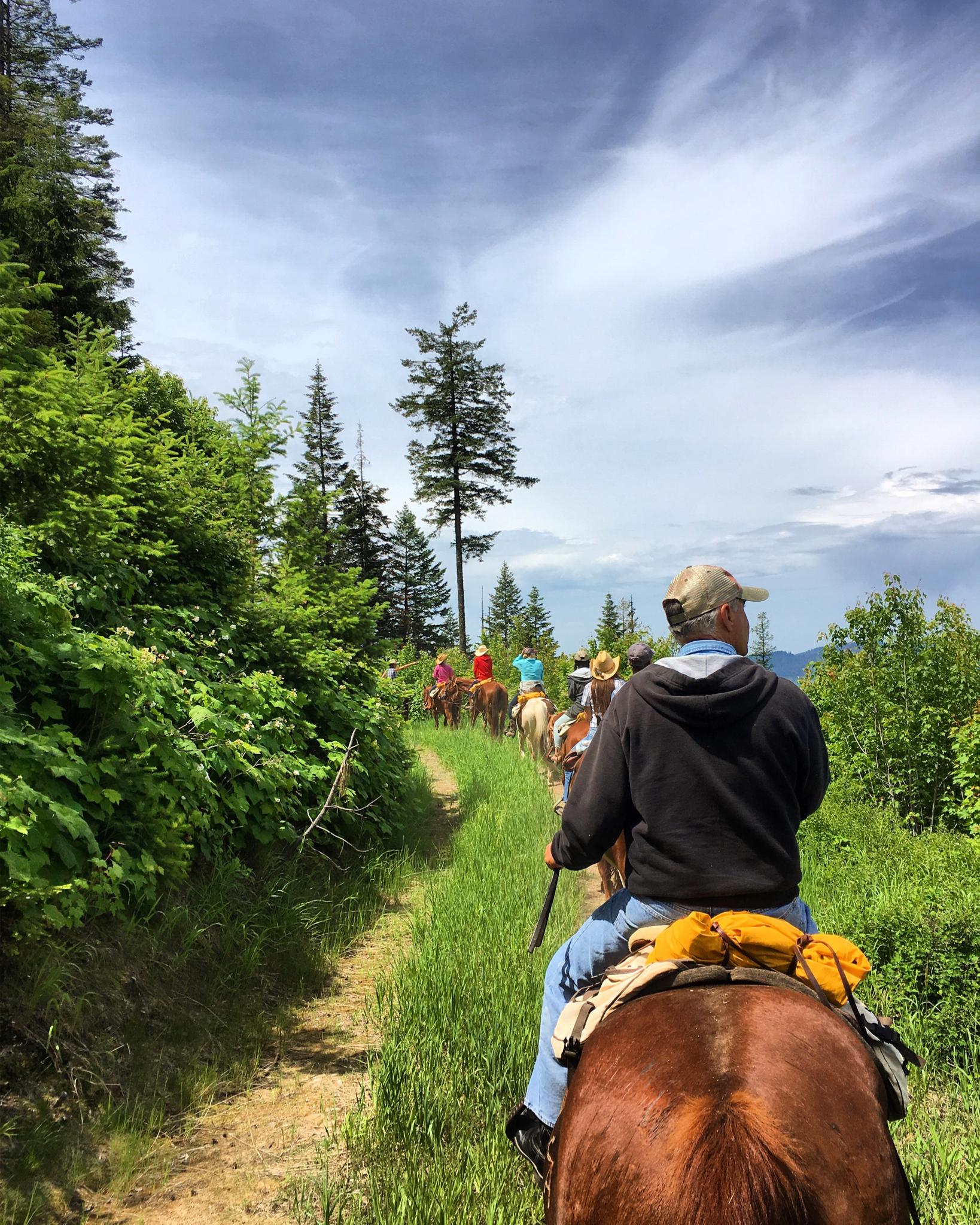 Group on horseback trail ride.