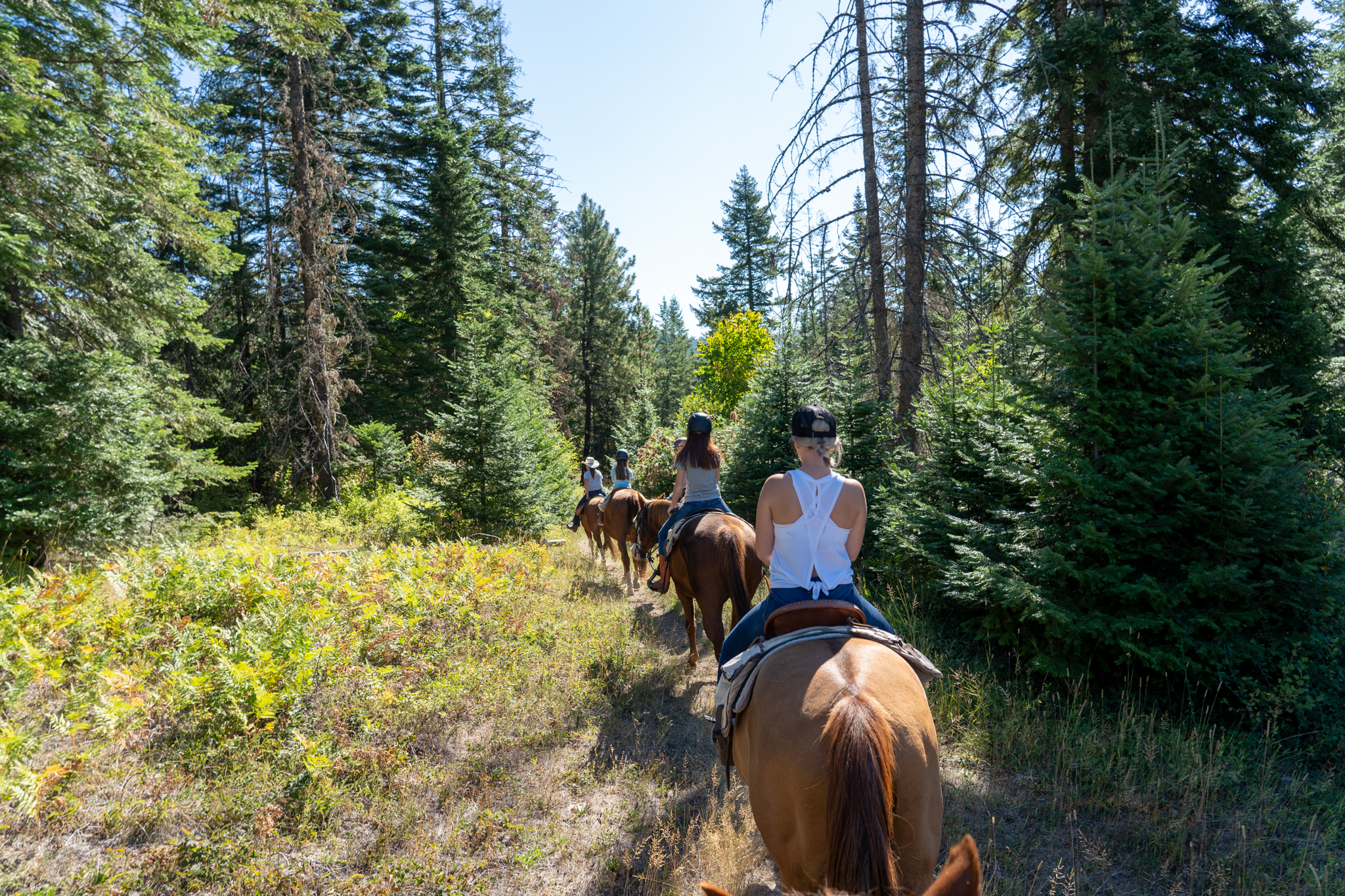 Group on horseback trail ride through forest.
