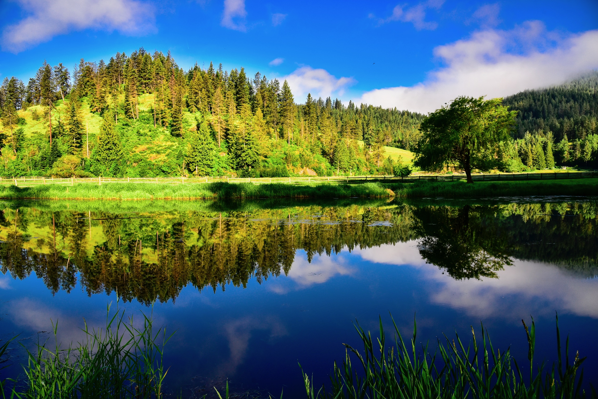 Lake and pine forest.